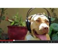 """Headphone game way UP courtesy of Pencil """"Bad Song"""" video. Thank you @klashcity for the referral."""